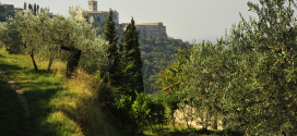 """Assisi, al bosco di San Francesco la mostra """"Nature dal mondo"""""""