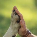 foto articolo amici animali.jpg 2