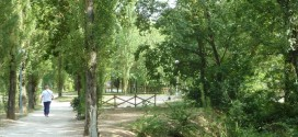 Nuovo accordo tra Comune e Lav Perugia per la salvaguardia degli animali presenti nel laghetto di Pian di Massiano