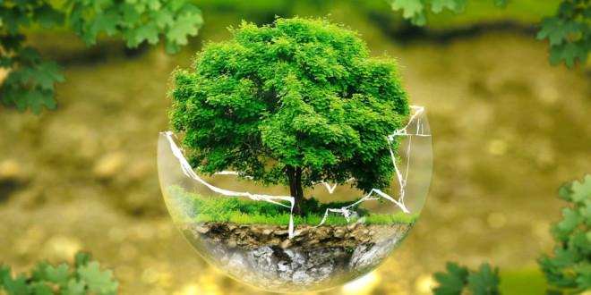 Omaggio in versi all'ambiente